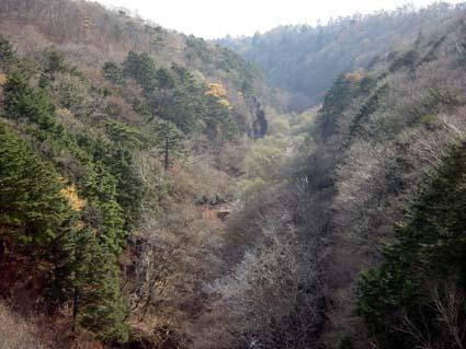 八ヶ岳の針葉樹林
